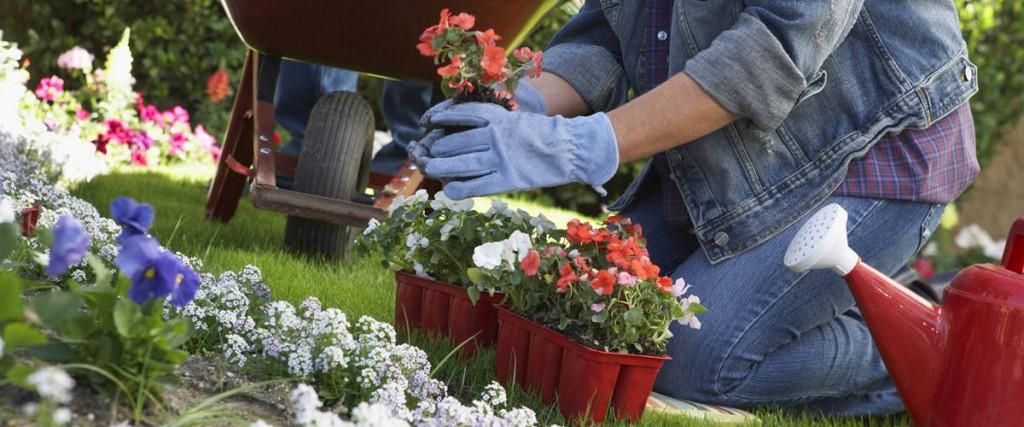 plantation-annuelles-jardinier